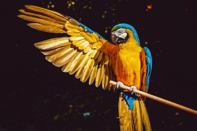Hodowanie papug – wyposażenie klatki, żywienie, opieka.
